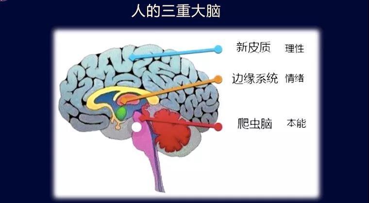 大会逐字稿系列 | 催眠技术在建立学霸底层思维模式的探索(下)